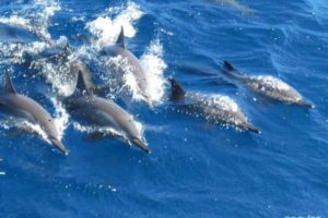 Sataya Dolphin Reef Overnight 155 $